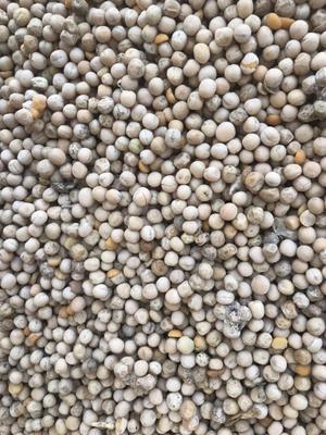 广东省广州市白云区干白豌豆