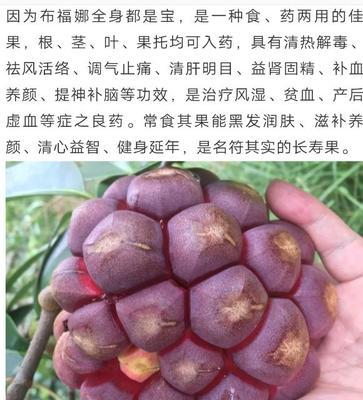 湖南省怀化市通道侗族自治县深红 300-600g
