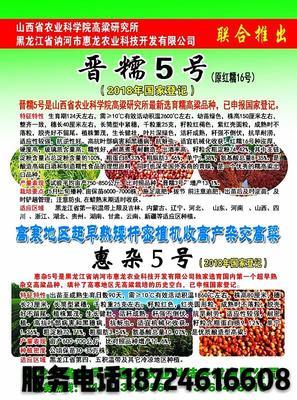 黑龙江省哈尔滨市双城市红高粱种 种子