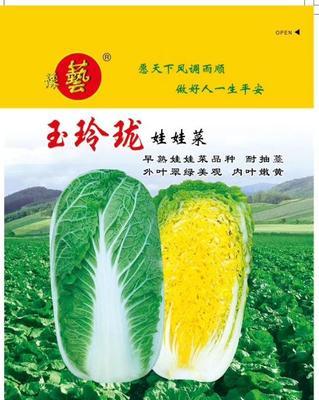 河南省周口市扶沟县娃娃菜种子