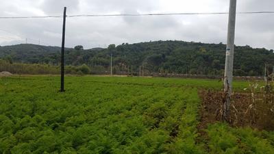 山西省忻州市静乐县三红七寸参胡萝卜 15cm以上 2两以上 3~4cm