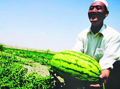新疆维吾尔自治区巴音郭楞蒙古自治州库尔勒市富硒西瓜 有籽 1茬 8成熟 8斤打底