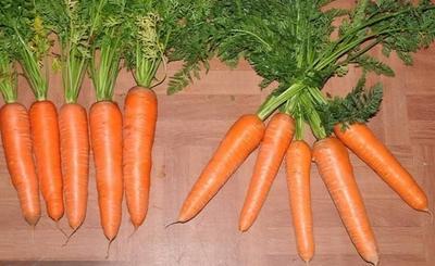 山东省青岛市平度市三红胡萝卜 15cm以上 3两以上 3~4cm