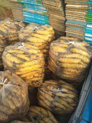 山西省晋中市榆次区黄胡萝卜 10~15cm 2两以上 3~4cm