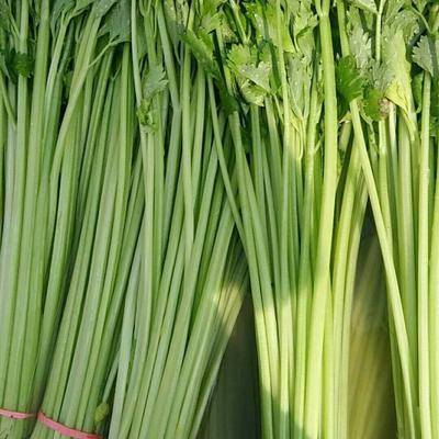 山东省聊城市东昌府区香芹 50~55cm 大棚种植 0.5斤以下