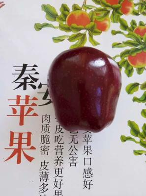甘肃省天水市秦安县红蛇果 200-300克