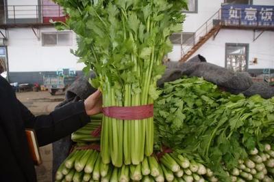 河北省邯郸市永年县皇妃芹菜 40~45cm 露天种植 0.5斤以下