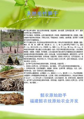 福建省泉州市永春县毛笋干 散装 1年
