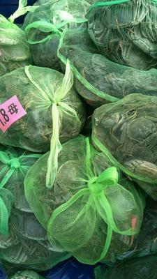 江苏省宿迁市沭阳县兴化螃蟹 2.0-2.5两 母蟹