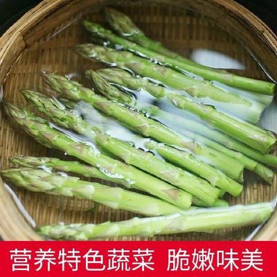 江苏省宿迁市沭阳县芦笋种子