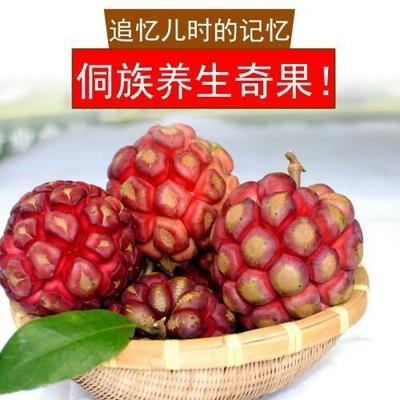 湖南省怀化市通道侗族自治县粉红 750-800g