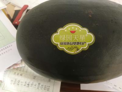 北京大兴区黑美人西瓜 有籽 1茬 9成熟 15斤打底