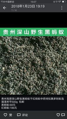 贵州省黔南布依族苗族自治州惠水县蚂蚁