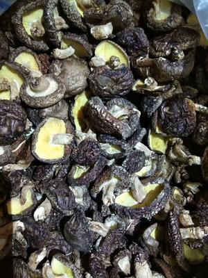 陕西省汉中市宁强县椴木菇 散装 1年以上