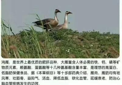 湖南省邵阳市洞口县鸿雁