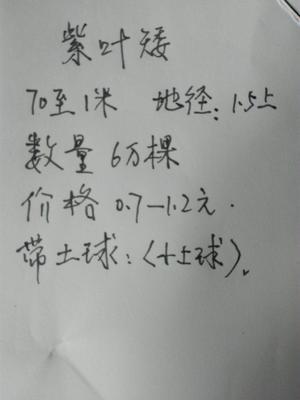 陕西省宝鸡市眉县紫叶矮樱