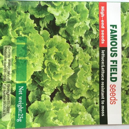 生菜种子 大叶耐热意大利进口生菜,产量高口感好