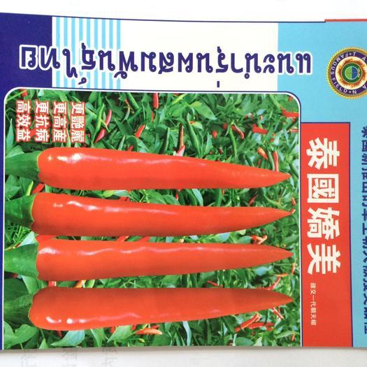 朝天椒种子 泰国进口朝天椒品种,更高产更艳丽抗病性好高效益