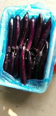 山东省潍坊市青州市大龙茄子 4两以上