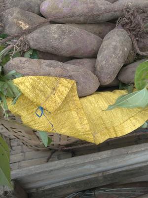 江西省赣州市南康区毛薯 1斤以上