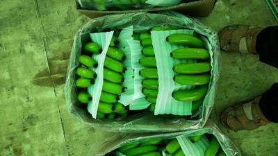 云南省红河哈尼族彝族自治州河口瑶族自治县河口香蕉 八成熟 40斤以下