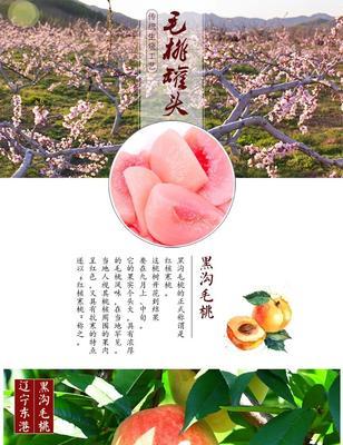 辽宁省丹东市东港市毛桃罐头 12-18个月