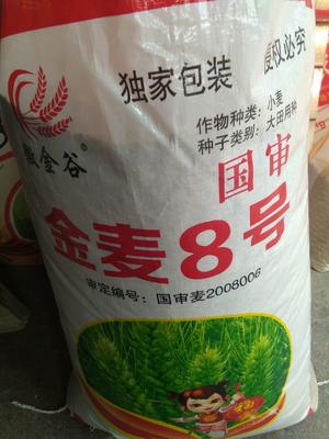 江苏省连云港市灌南县小麦种子