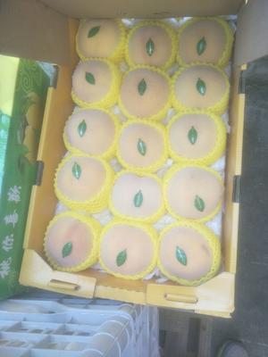 上海青浦区新世纪黄桃 55mm以上 4两以上