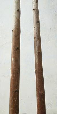 山东省潍坊市坊子区生姜挡阳网腊木杆