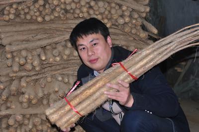 河南省焦作市温县铁棍山药 50~70cm