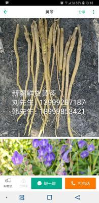 新疆维吾尔自治区乌鲁木齐市头屯河区黄芩