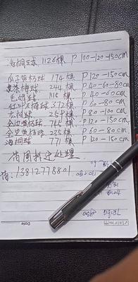 江苏省常州市武进区海桐球