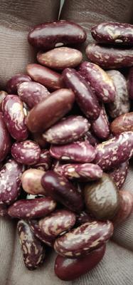 天津河北区赤小豆