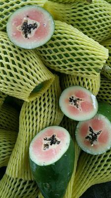 广西壮族自治区崇左市大新县红心木瓜 1 - 1.5斤