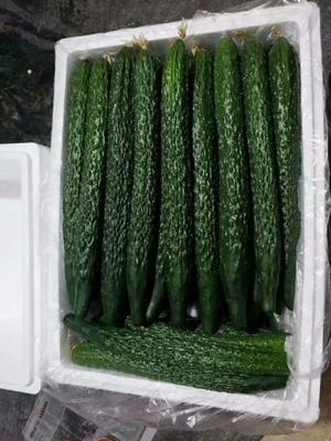 云南省保山市隆阳区密刺黄瓜 22~25cm 干花带刺