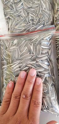 新疆维吾尔自治区阿勒泰地区阿勒泰市601葵瓜子 袋装