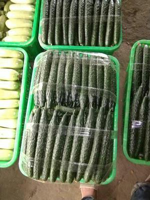 四川省成都市新都区油亮密刺黄瓜 30.0cm 干花带刺