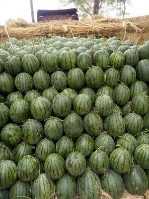辽宁省沈阳市新民市甜王西瓜 有籽 1茬 8成熟 10斤打底