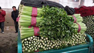 河北省邯郸市丛台区西芹 55~60cm 露天种植 0.5斤以下