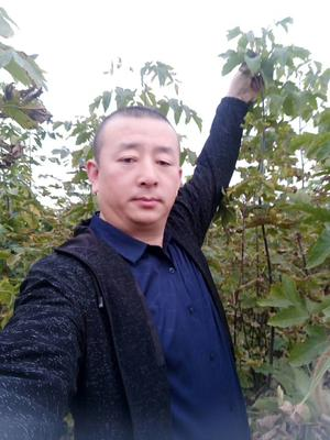 吉林省长春市宽城区造型糖槭树