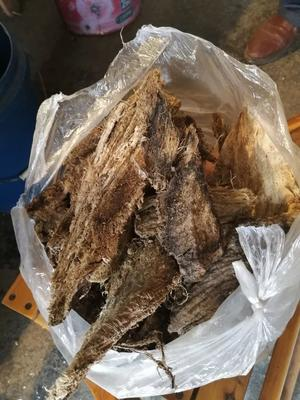 陕西省商洛市山阳县野生葛根 1.5-2.0斤