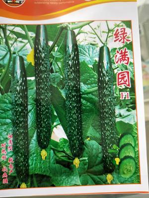 河南省安阳市滑县刺黄瓜 30cm以上 干花带刺