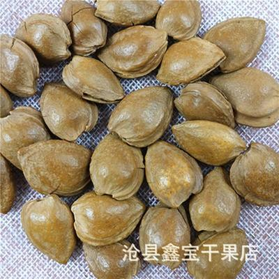 河北省沧州市沧县甜杏仁 6-12个月 包装