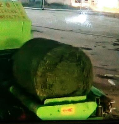 山东省东营市广饶县玉米青贮草