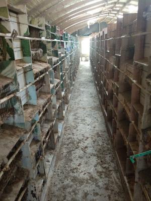 安徽省宿州市埇桥区兔笼