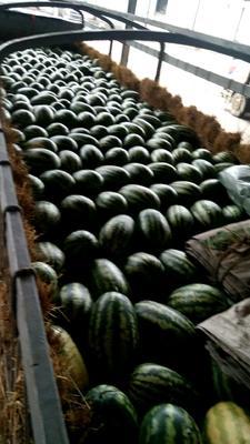云南省德宏傣族景颇族自治州芒市西农8号西瓜 有籽 2茬 8成熟 10斤打底