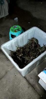 江苏省泰州市兴化市兴化螃蟹 2.0-2.5两 统货