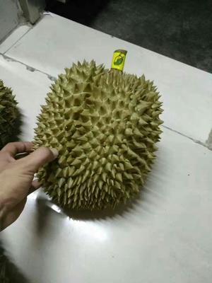 广东省珠海市香洲区泰国金枕榴莲 80 - 90%以上 3 - 4公斤