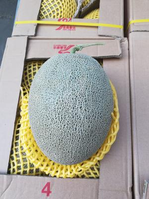 陕西省西安市未央区西州蜜 3斤以上