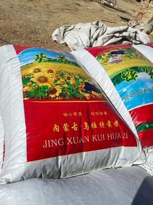 内蒙古自治区巴彦淖尔市乌拉特前旗363葵瓜子 袋装